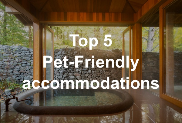 TOP5 Pet-Friendly